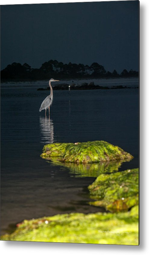 Heron Metal Print featuring the photograph Night Stalker by Volker blu Firnkes
