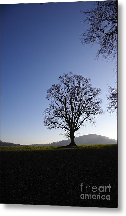 Oak Metal Print featuring the photograph Oak Tree And Evening Sky by Premierlight Images