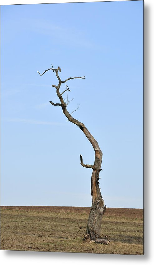 Tree Metal Print featuring the photograph One Lonely Tree by Matthias Hauser