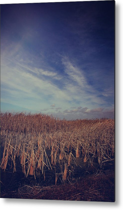 Coyote Hills Regional Park Metal Print featuring the photograph Our Day Will Come by Laurie Search