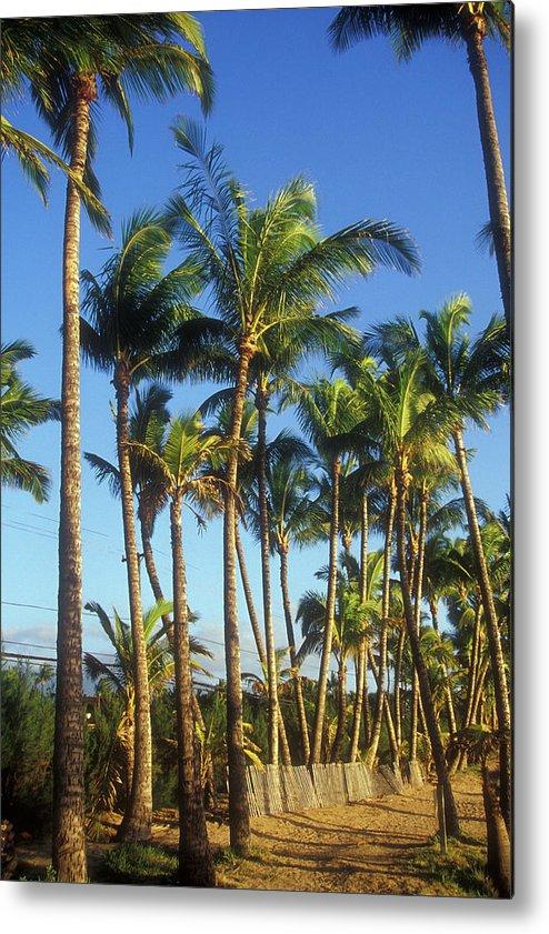 Hawaii Metal Print featuring the photograph Palms On Hawaii Beach Trail by John Burk