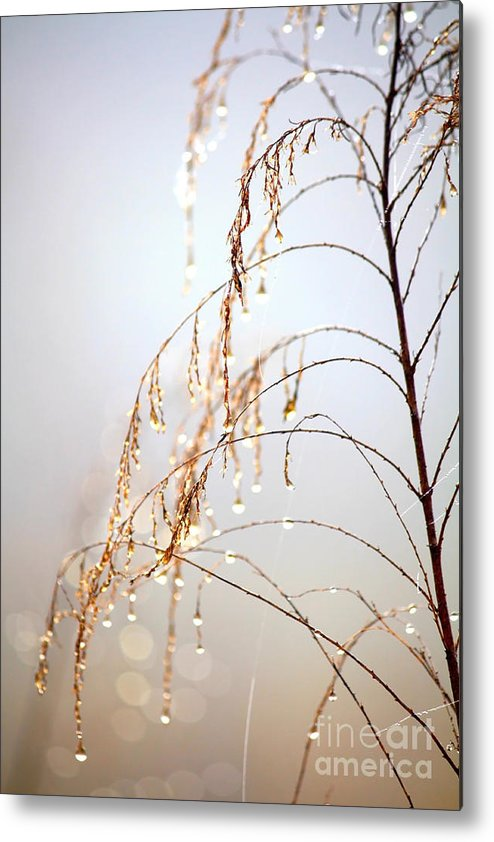 Nature Metal Print featuring the photograph Peaceful Morning by Carol Groenen