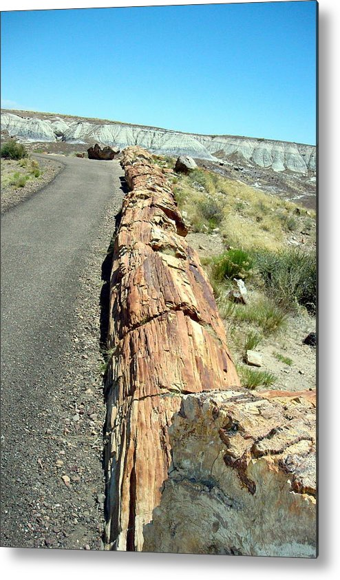 Petrified Wood Metal Print featuring the photograph Petrified Log by Susan Woodward