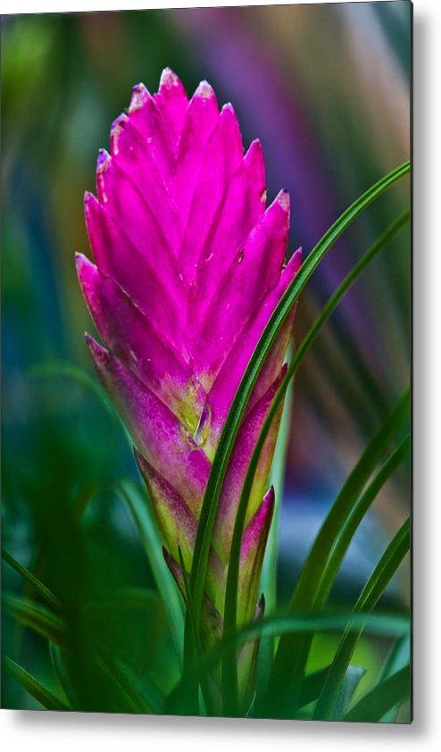 Bromelaid Metal Print featuring the digital art Pink Bromelaid Flower by Georgianne Giese