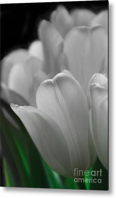Tulips Metal Print featuring the photograph Pure And Simple by Michelle Orai