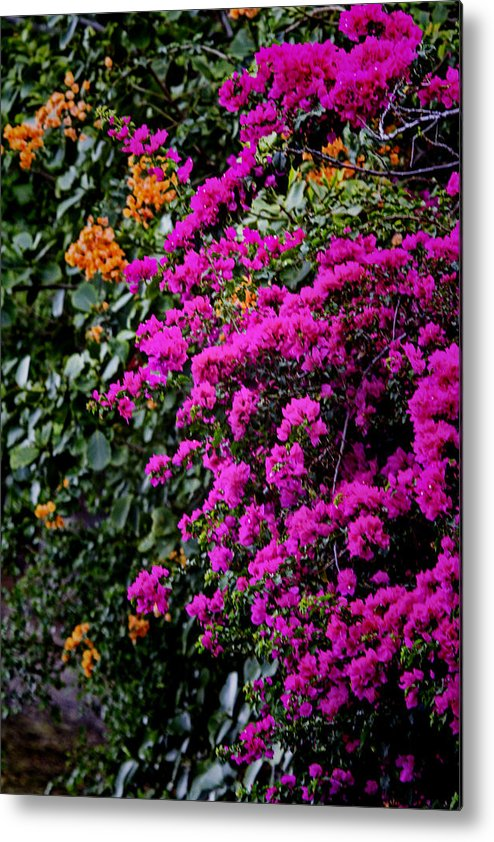 Colors Metal Print featuring the photograph Purple Contrast by Douglas Barnard