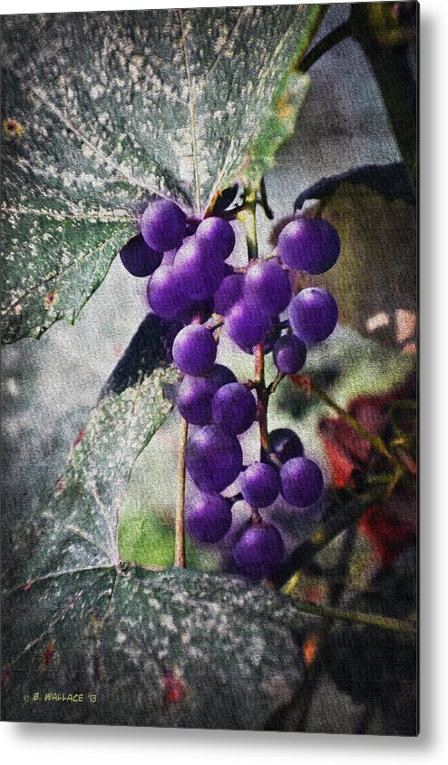 2d Metal Print featuring the photograph Purple Grapes - Oil Effect by Brian Wallace