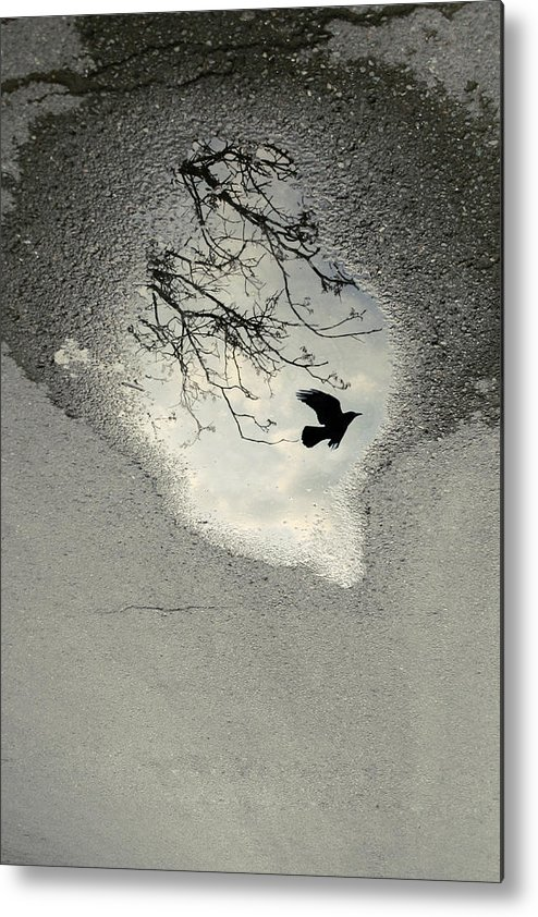 Crow Metal Print featuring the photograph Raven Reflection by Cambion Art