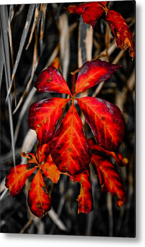 Bamboo Metal Print featuring the photograph Red by Melinda Pettery