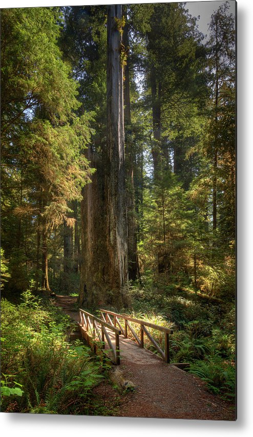 California Metal Print featuring the photograph Redwood Forest On A Perfect Spring Day by Ed Freeman