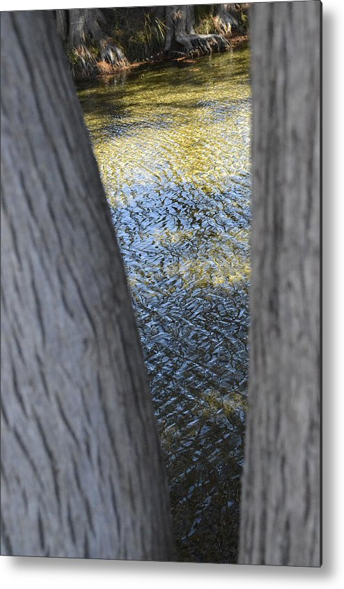 Metal Print featuring the photograph V by Ricky Cerda
