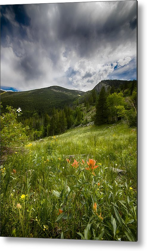 Mountain Wildflowers Metal Print featuring the photograph Rocky Mountain Meadow by Garett Gabriel