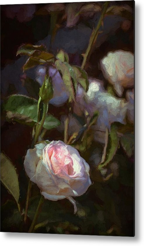 Floral Metal Print featuring the photograph Rose 122 by Pamela Cooper