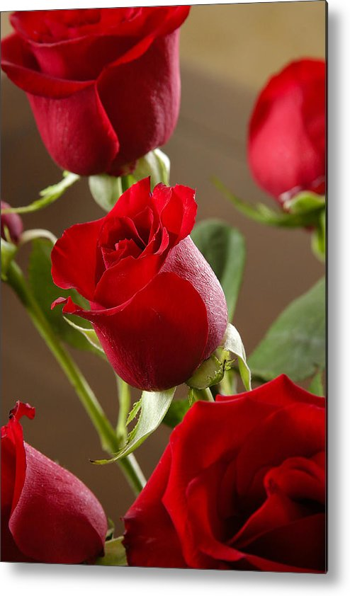 Nature Metal Print featuring the photograph Roses by W Chris Fooshee