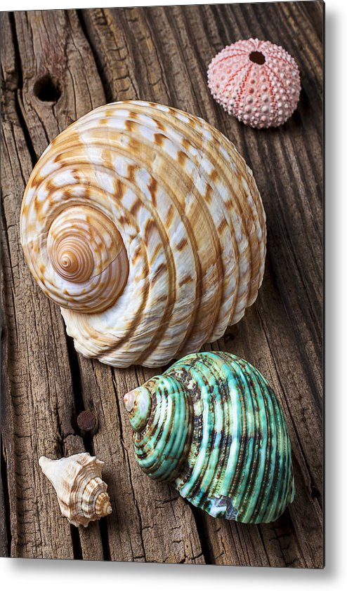 Sea Shell Metal Print featuring the photograph Sea Shells With Urchin by Garry Gay