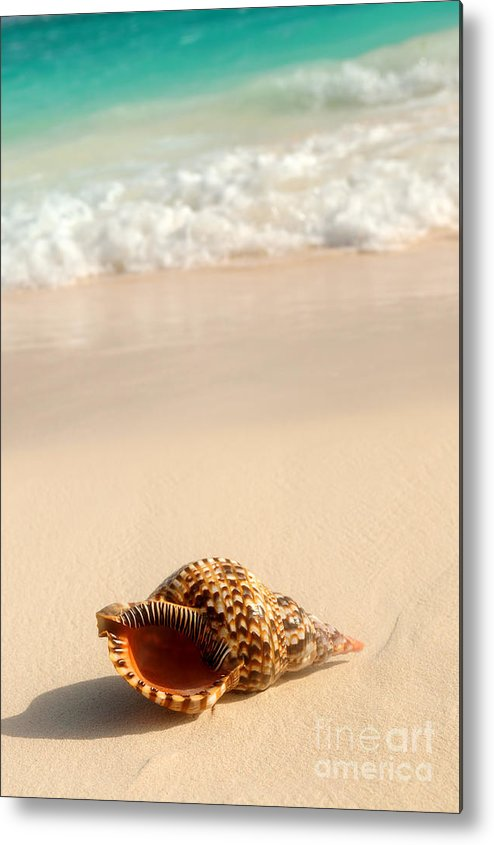 Seashell Metal Print featuring the photograph Seashell And Ocean Wave by Elena Elisseeva