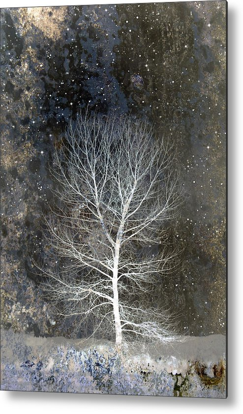 Silent Night Metal Print featuring the photograph Silent Night by Carol Leigh