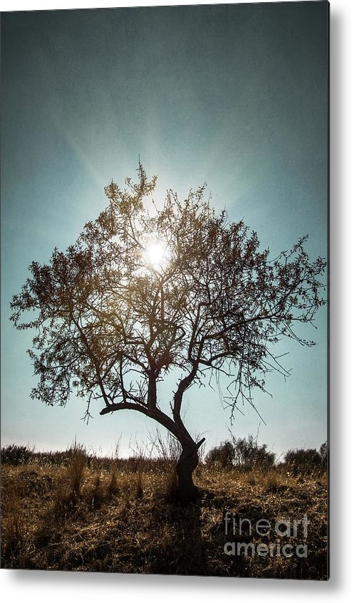 Dark Metal Print featuring the photograph Single Tree by Carlos Caetano