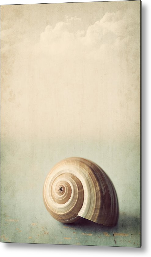 Shell Metal Print featuring the photograph Sojourn by Amy Weiss