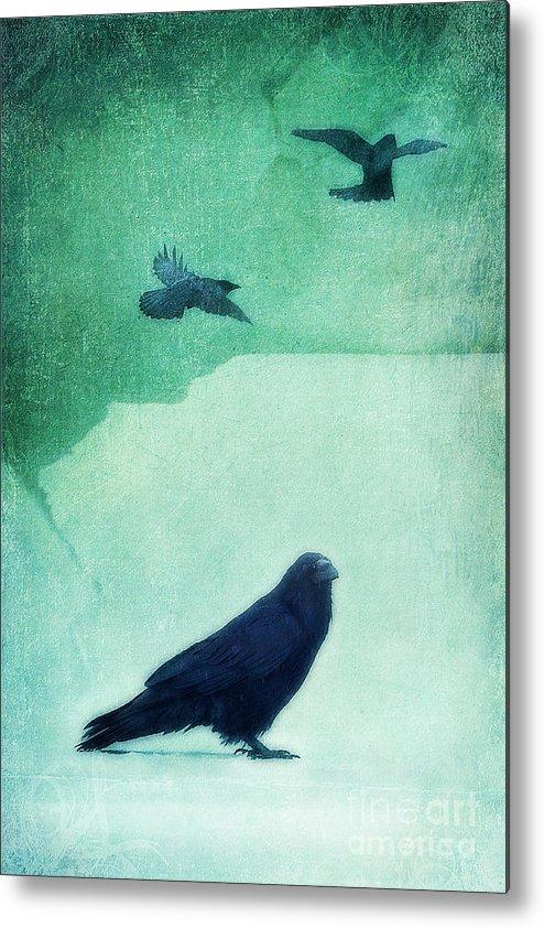 Raven Metal Print featuring the photograph Spirit Bird by Priska Wettstein