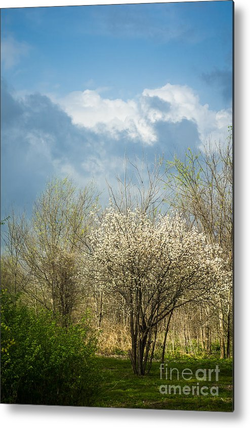 Spring Metal Print featuring the photograph Spring Blossoms Storm Approaching by Imagery by Charly