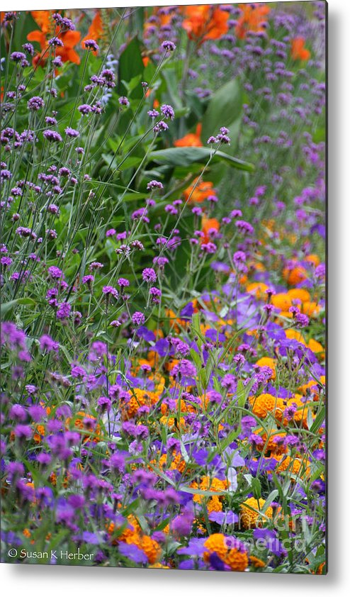 Flower Metal Print featuring the photograph Summer's Colors by Susan Herber