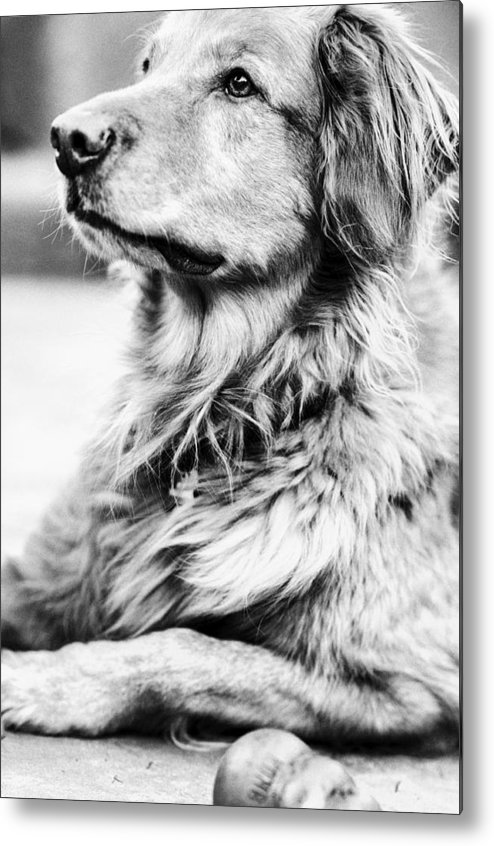 Black And White Metal Print featuring the photograph Sunbathing by Kelly Hayner