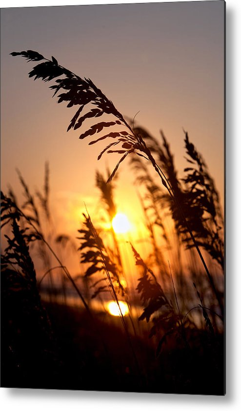 Dunes Metal Print featuring the photograph Sunset Seaoats by Mic Smith