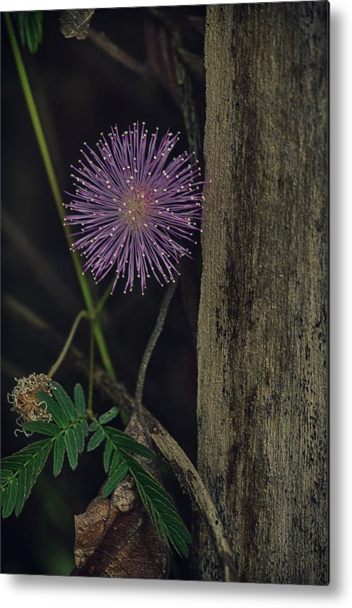 Freshness Metal Print featuring the photograph Thailand Purple Wild Flowers by David Longstreath