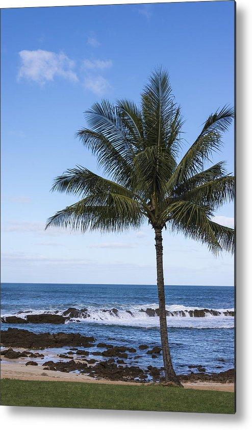 Perfect Palm Tree Sharks Cove At Sunset Beach Oahu Hawaii Hi Seascape Metal Print featuring the photograph The Perfect Palm Tree - Sunset Beach Oahu Hawaii by Brian Harig