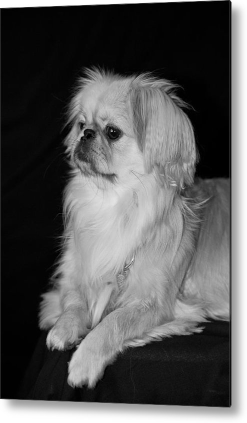 Animal Metal Print featuring the photograph The Princess by Kristi Swift