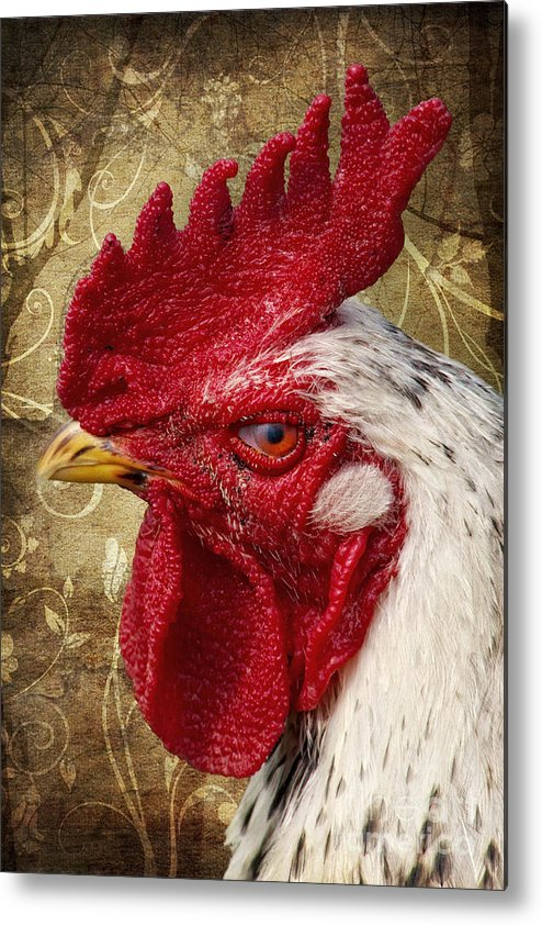 Rooster Metal Print featuring the photograph The Rooster by Angela Doelling AD DESIGN Photo and PhotoArt