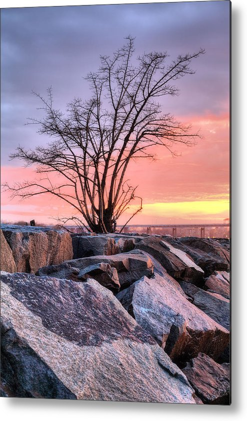 The Tree Metal Print featuring the photograph The Tree V by JC Findley