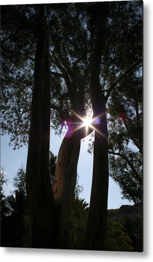 Woodland Metal Print featuring the photograph Touch Of Heaven by Lisa Amport