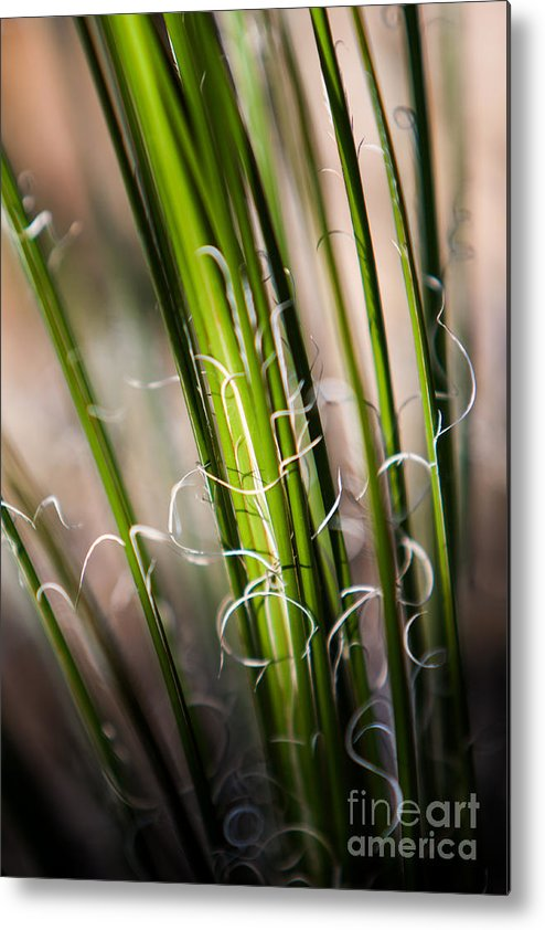 Botanical Metal Print featuring the photograph Tropical Grass by John Wadleigh