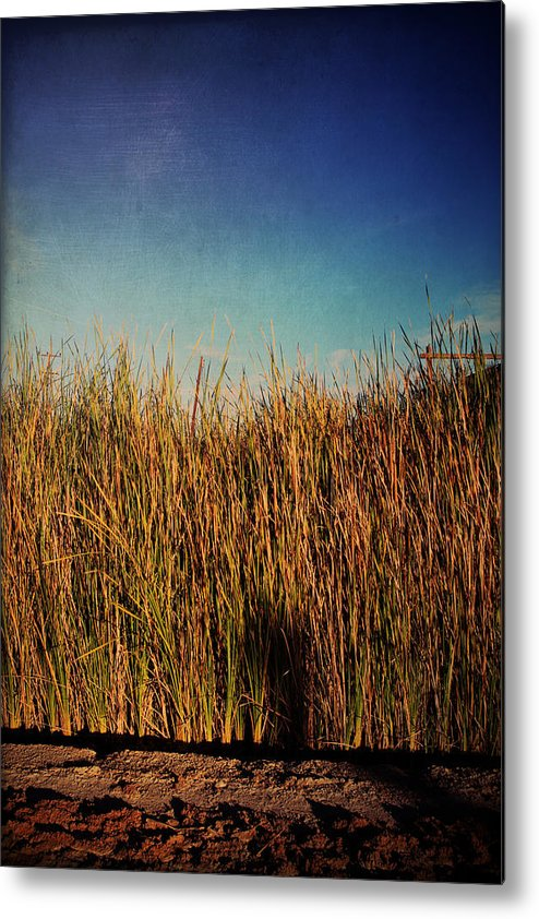 Niland Metal Print featuring the photograph Unexpected Things by Laurie Search