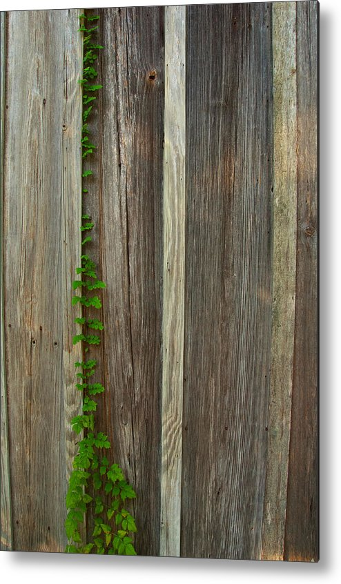 Metal Print featuring the photograph Vine L Siding by Ricky Cerda