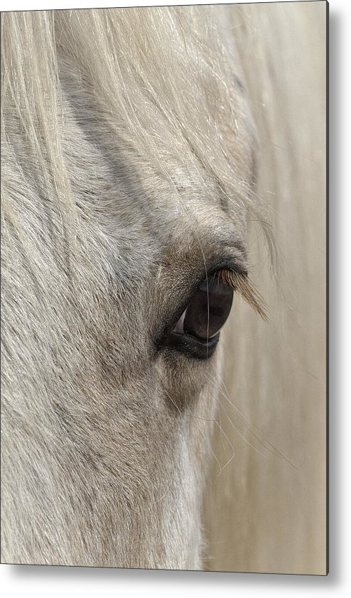 White Beauty Metal Print featuring the photograph White Beauty by Wes and Dotty Weber