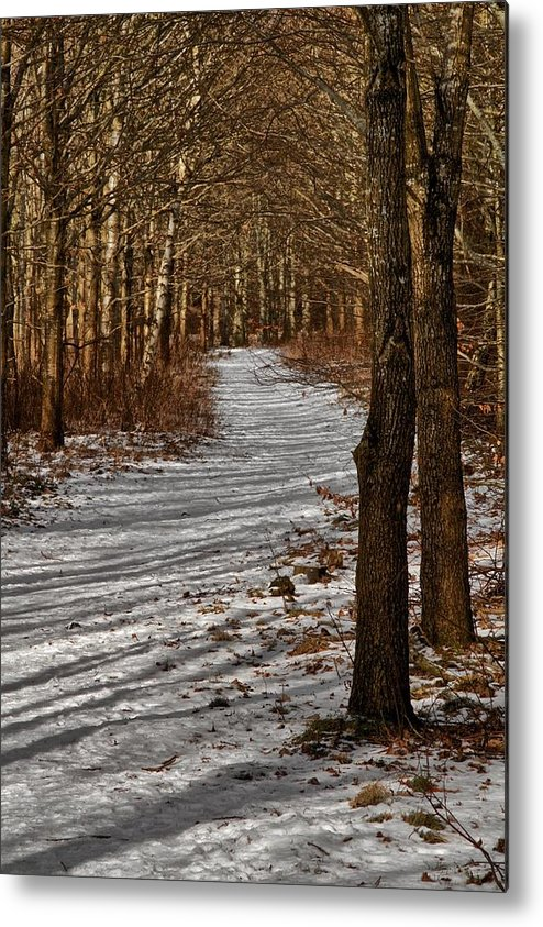 Woods Metal Print featuring the photograph Winter Gold by Odd Jeppesen
