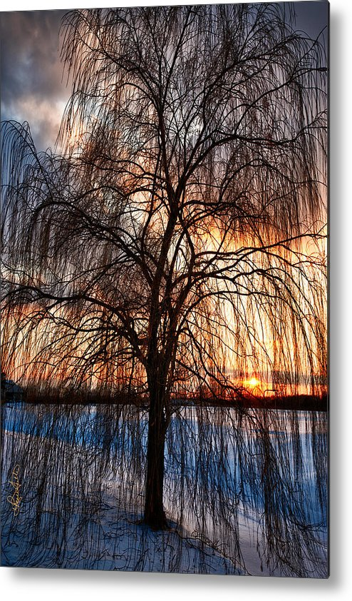 Winter Metal Print featuring the photograph Winter Willow by Renee Sullivan