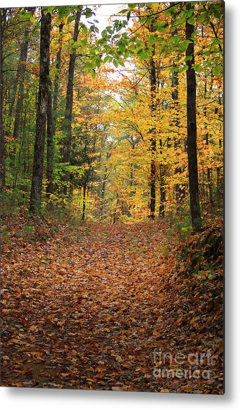 Fall Color Metal Print featuring the photograph Woods 2 by Michael Mooney