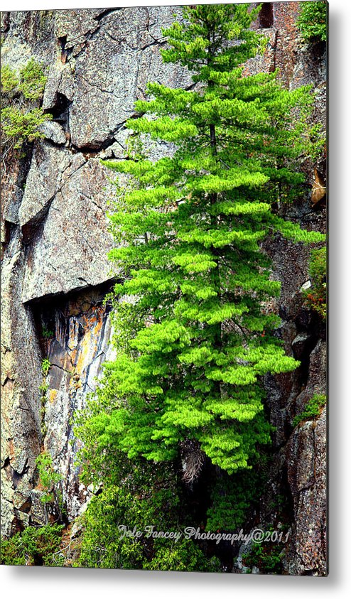 Photography Metal Print featuring the photograph On The Rocks by Jale Fancey