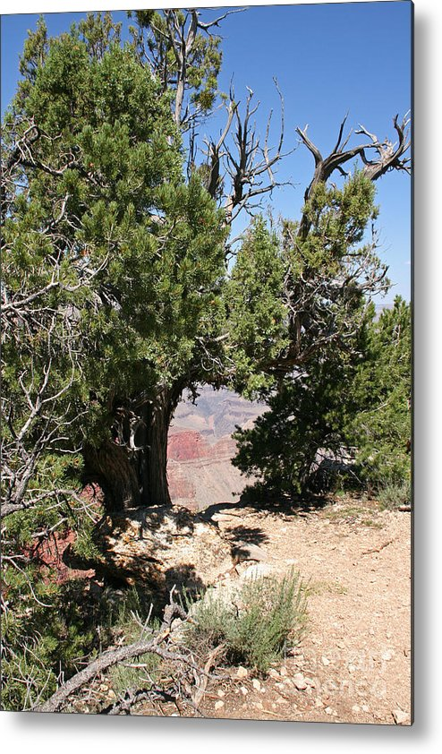 Adventure Metal Print featuring the photograph Grand Canyon National Park Usa Arizona by Audrey Campion
