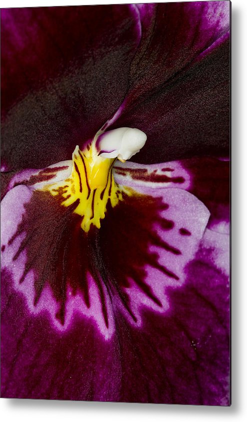 Orchid Metal Print featuring the photograph Exotic Orchids Of C Ribet by C Ribet