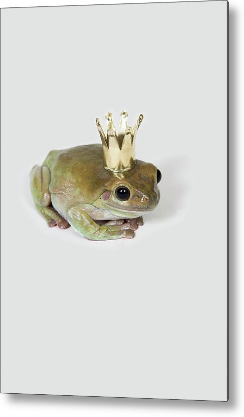 Vertical Metal Print featuring the photograph A Frog Wearing A Crown, Studio Shot by Paul Hudson