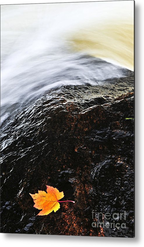 River Metal Print featuring the photograph Autumn Leaf On River Rock by Elena Elisseeva