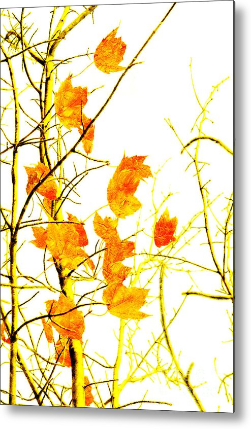 Abstract Metal Print featuring the photograph Autumn Leaves Abstract by Andee Design
