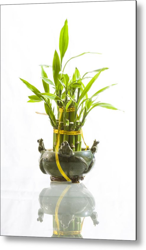 Conceptual Metal Print featuring the photograph Bamboo In Hi-key by Jeremy Bartlett