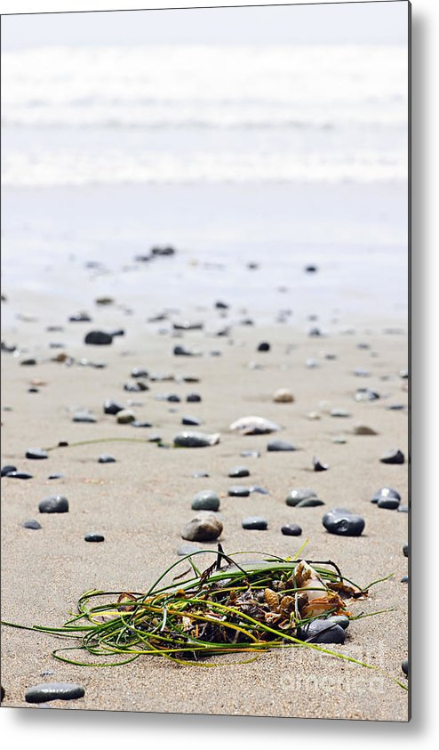 Pacific Metal Print featuring the photograph Beach Detail On Pacific Ocean Coast Of Canada by Elena Elisseeva