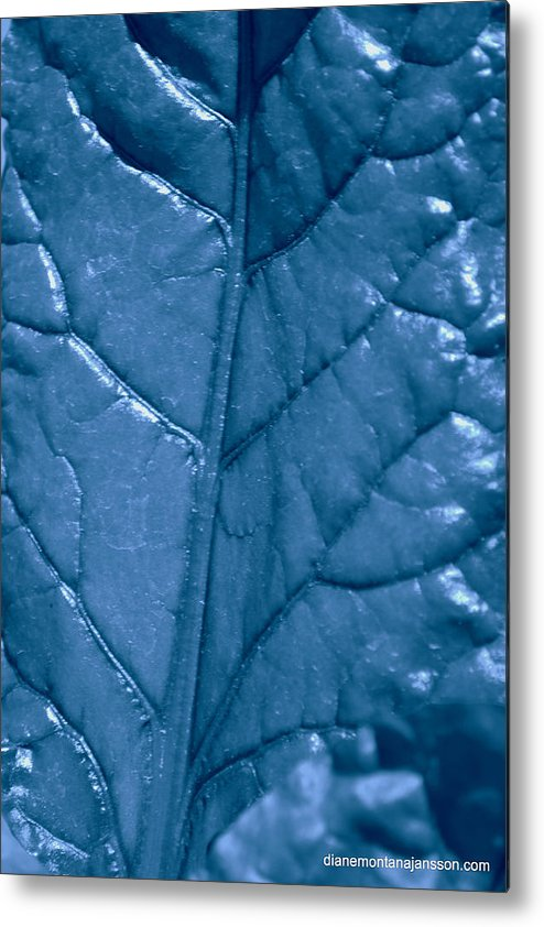 Leaf Metal Print featuring the photograph Blue Songs by Diane montana Jansson